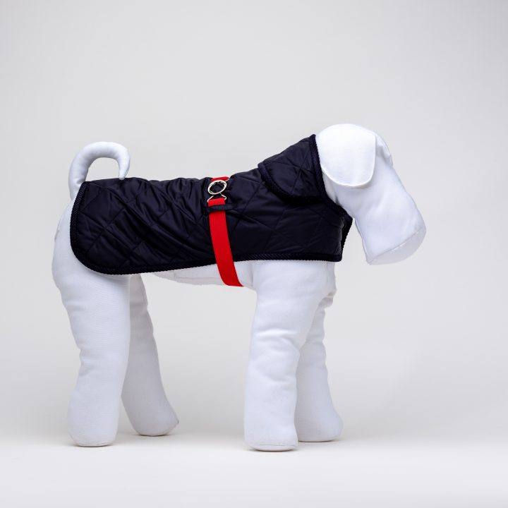 blue quilted waterproof coat for dogs with red belt