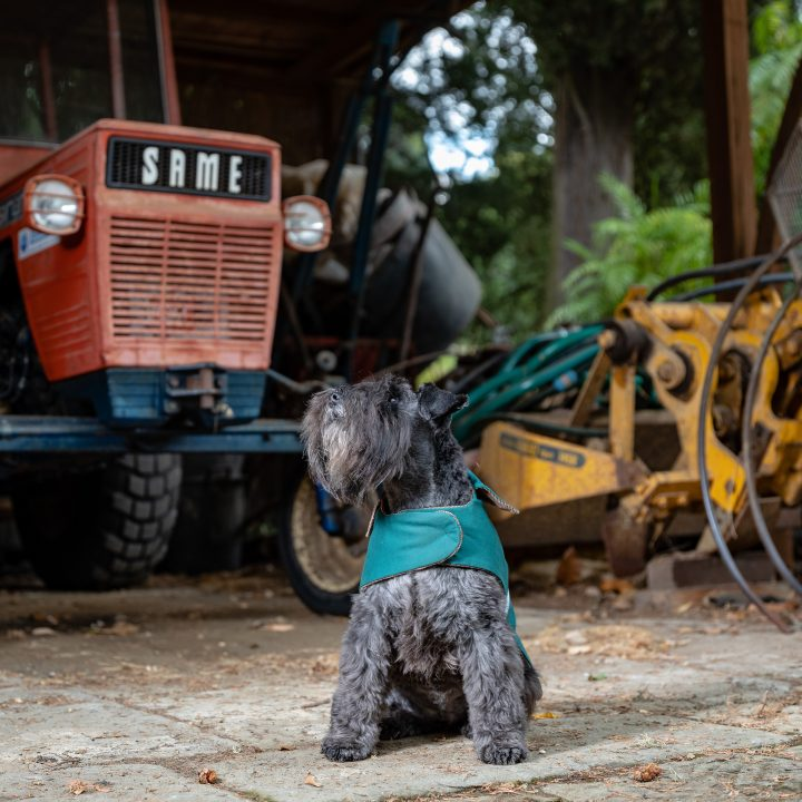 Ultimate luxury dog coat, dog with a coat and a tractor