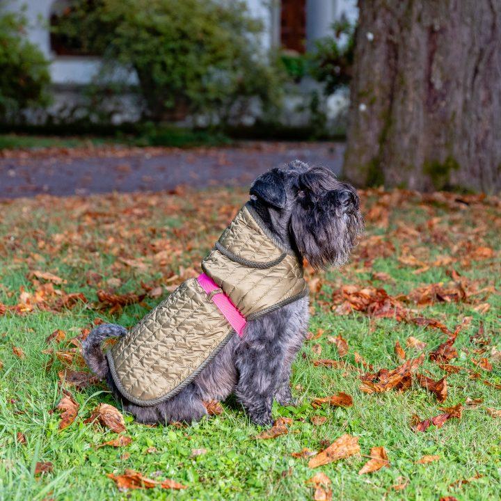 GREEN-PINK&QUILT RAIN, cappottino impermeabile, trapunta inglese verde militare, cane Schnauzer Fausta