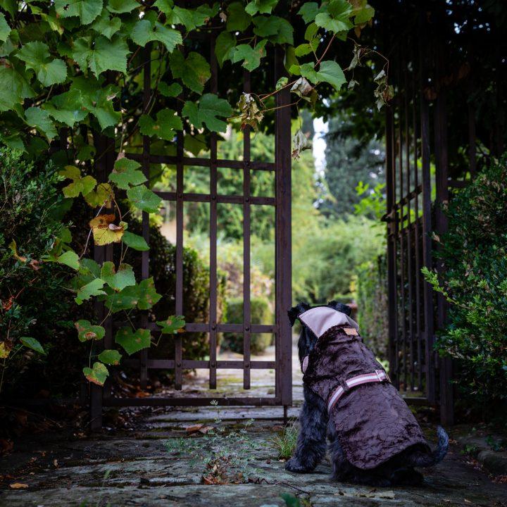 cappottino per cani impermeabile velluto di cotone indossato da un cane Schnauzer davanti a una porta