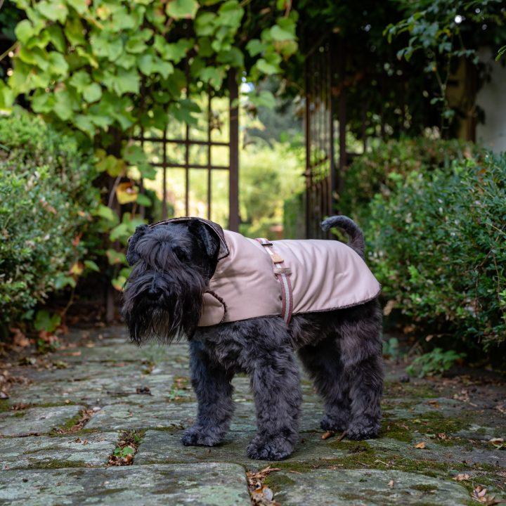 Impermeabile e cappottino di velluto di cotone e lino indossato in esterno da cane Schnauzer