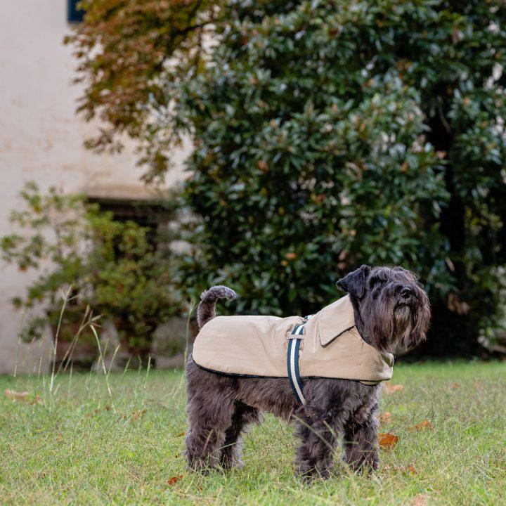 cappottino impermeabile per cani, reversibile e double face, con cane schnauzer