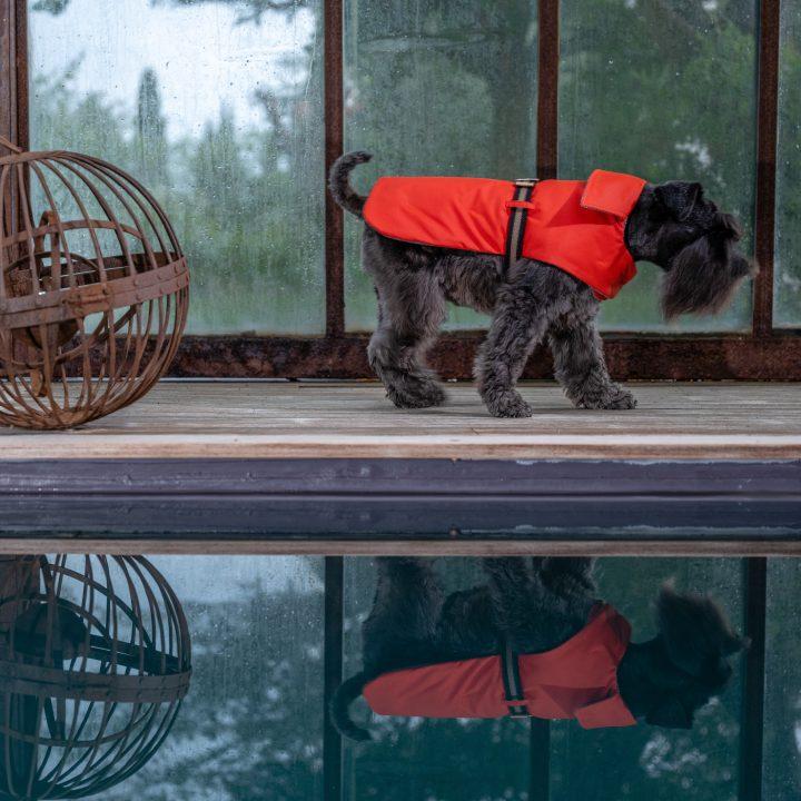 impermeabile per cani, cappottino double face, indossato da Schanuzer su pavimento di legno