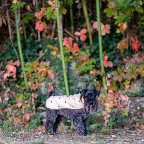 impermeabili per cani, abbigliamento di lusso, indossato da cane Schanuzer color beige