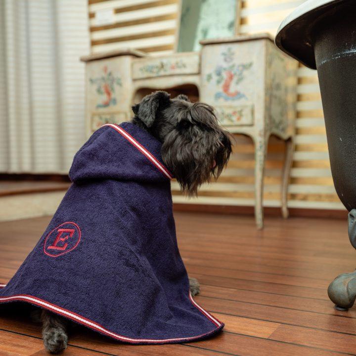 accappatoio per cane maschio, blu presidenziale, indossato da cane Schnauzer