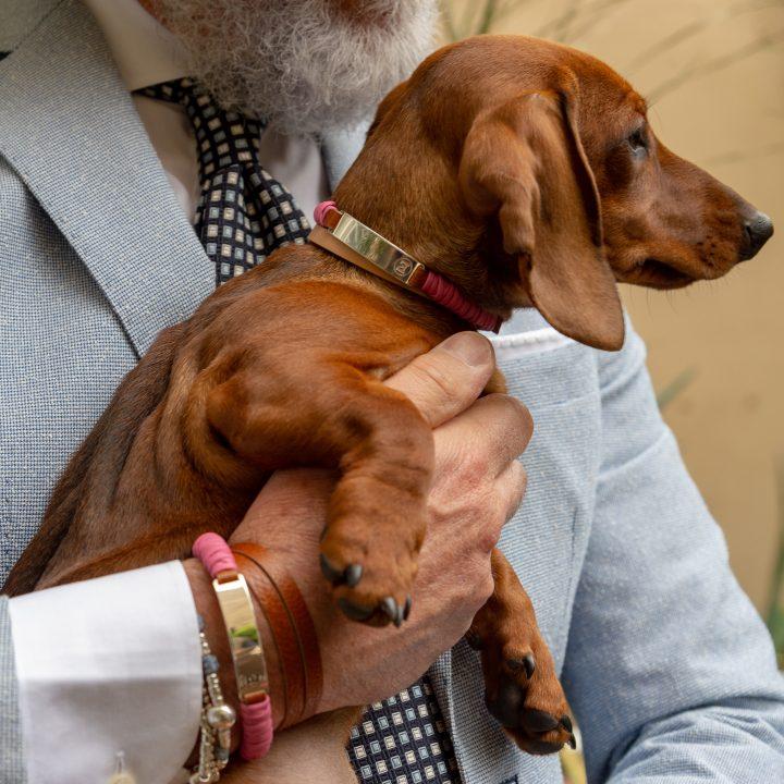 Taffy bar tag, braccialetto e tag per cani, indossato da uomo e cane bassotto