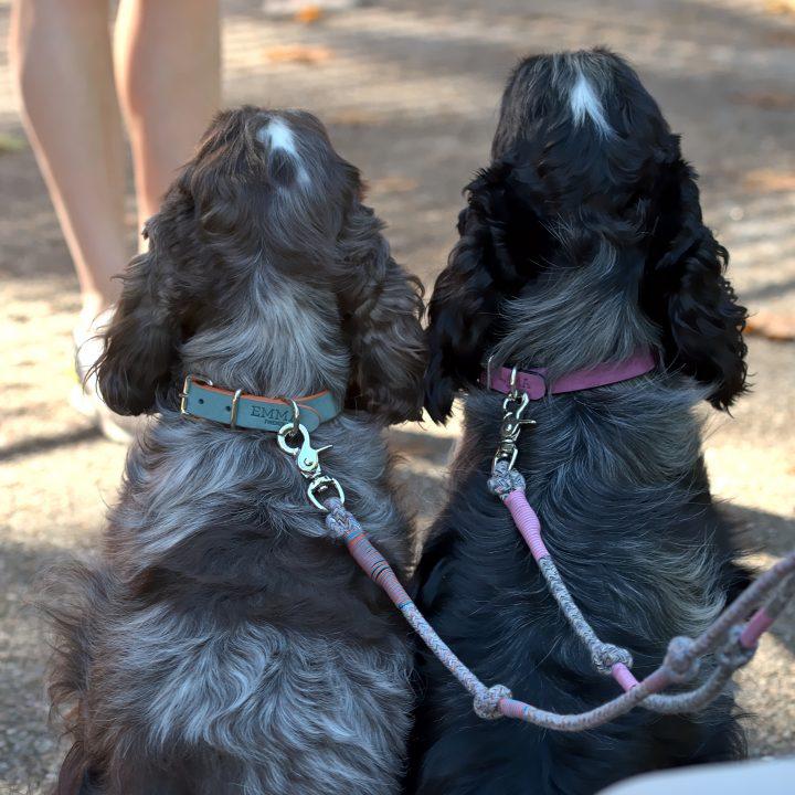 guinzagli per cani chic realizzati con materiali riciclati