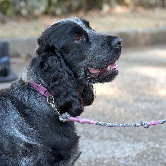 guinzaglio per cani chic, ecologico, materiali riciclati
